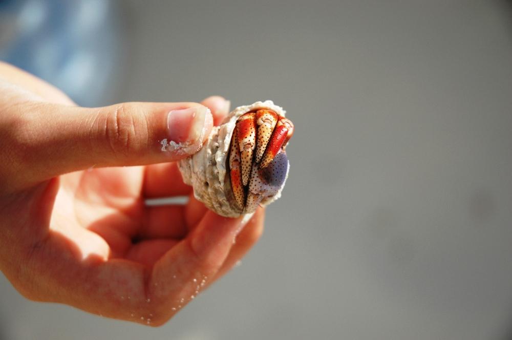 Crab Shell