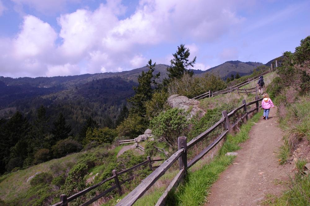 Woods Hiking