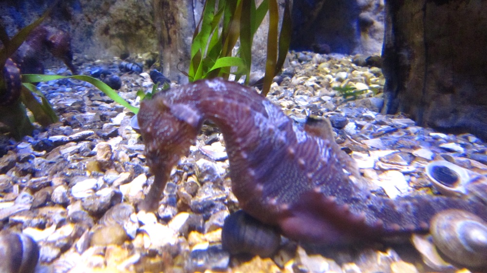 New England Aquarium 10