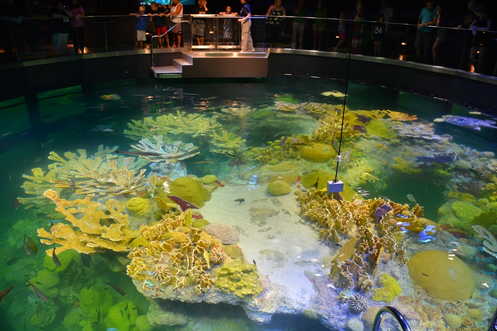 New England Aquarium 15