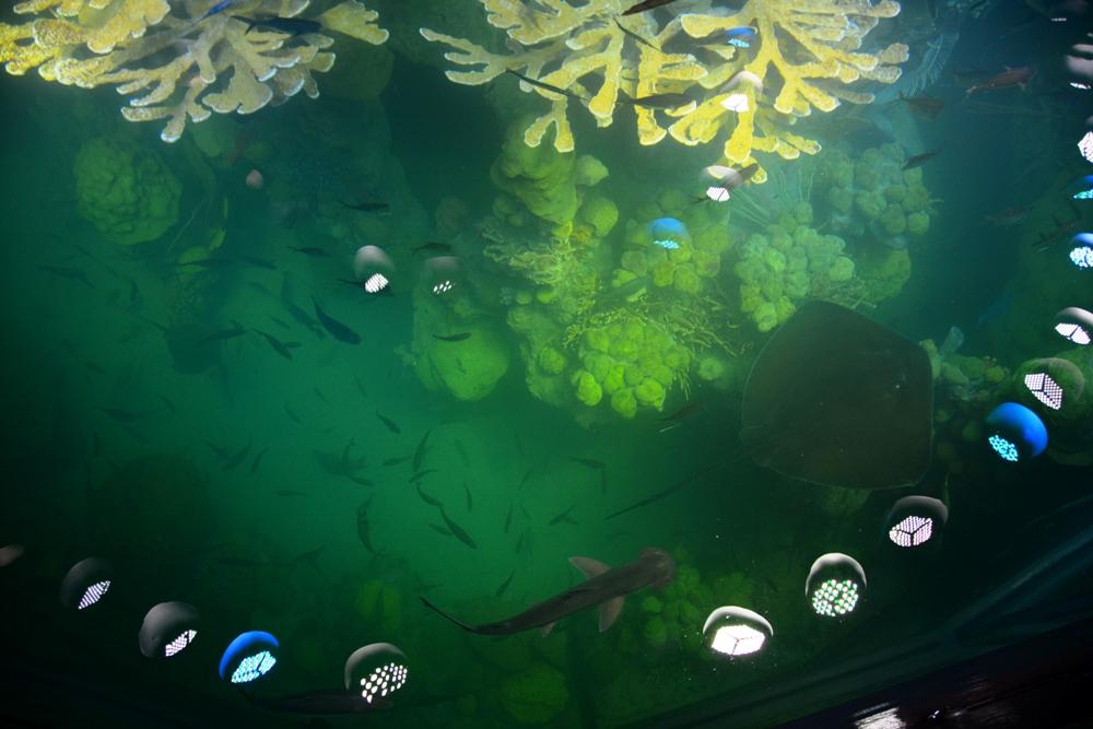 New England Aquarium 16