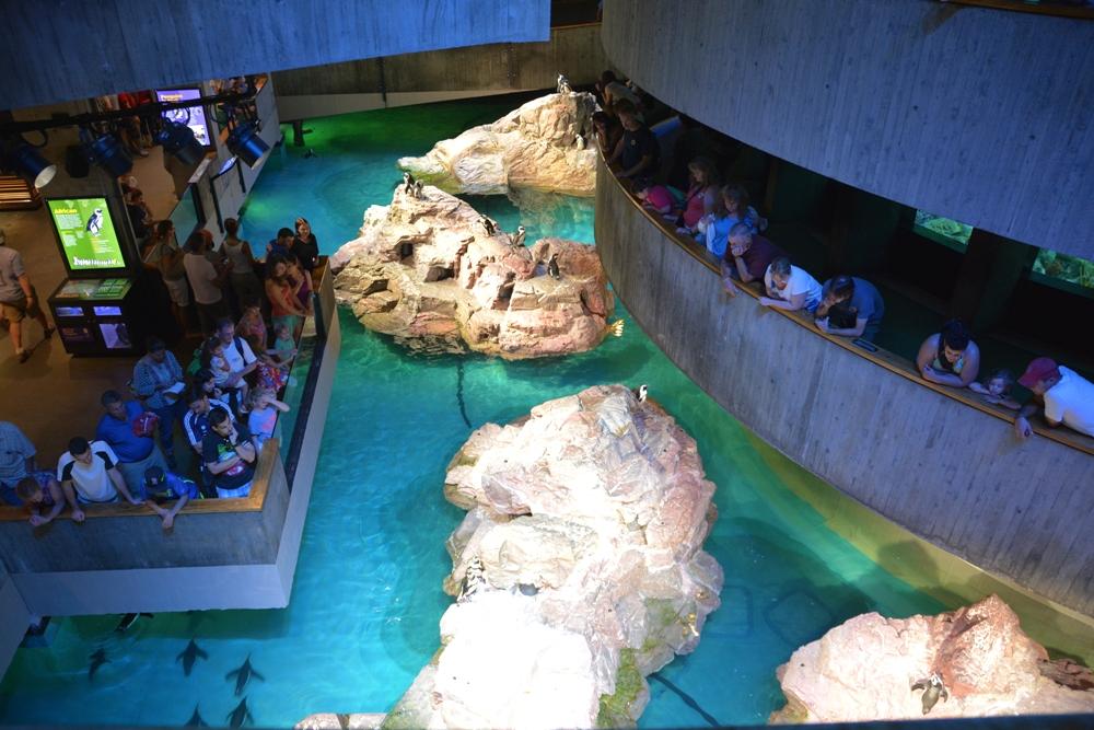New England Aquarium 2