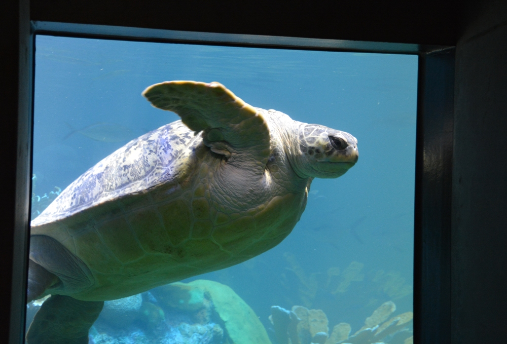 New England Aquarium 4