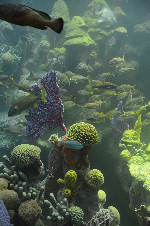 New England Aquarium 5
