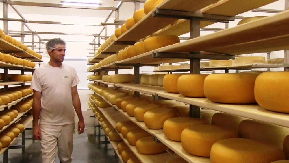 Gunn's Hill Cheese