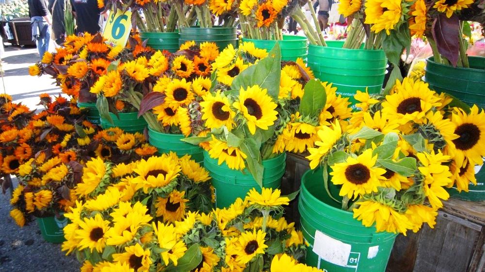 St. Jacobs Market Flowers