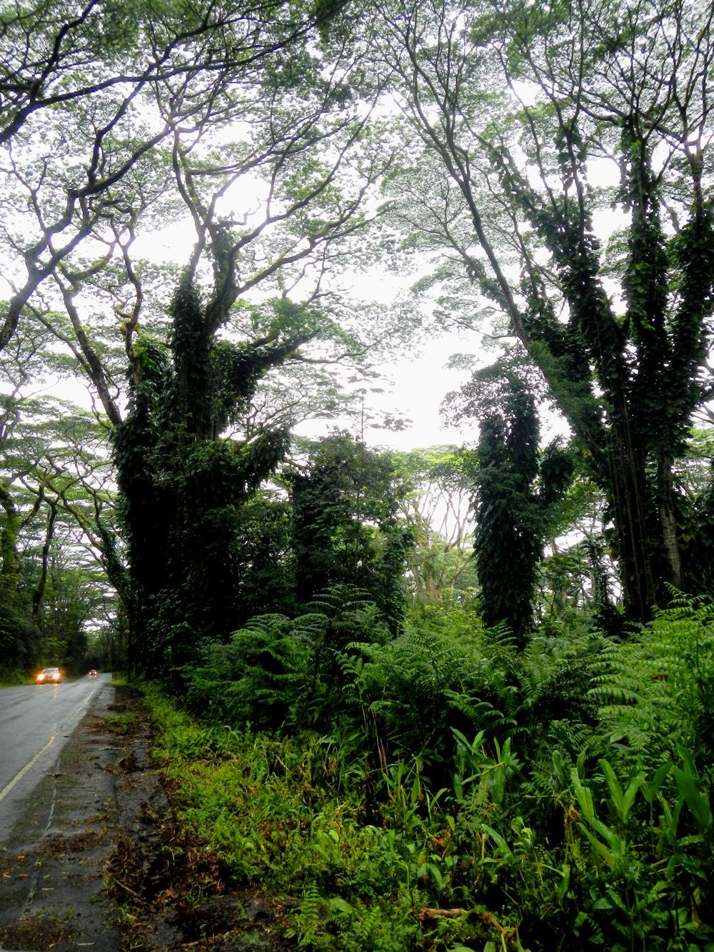 Hilo Drive