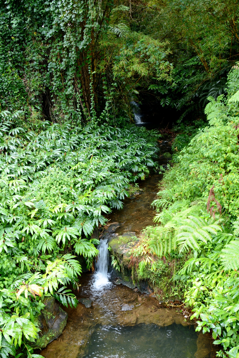 Hilo Jungle