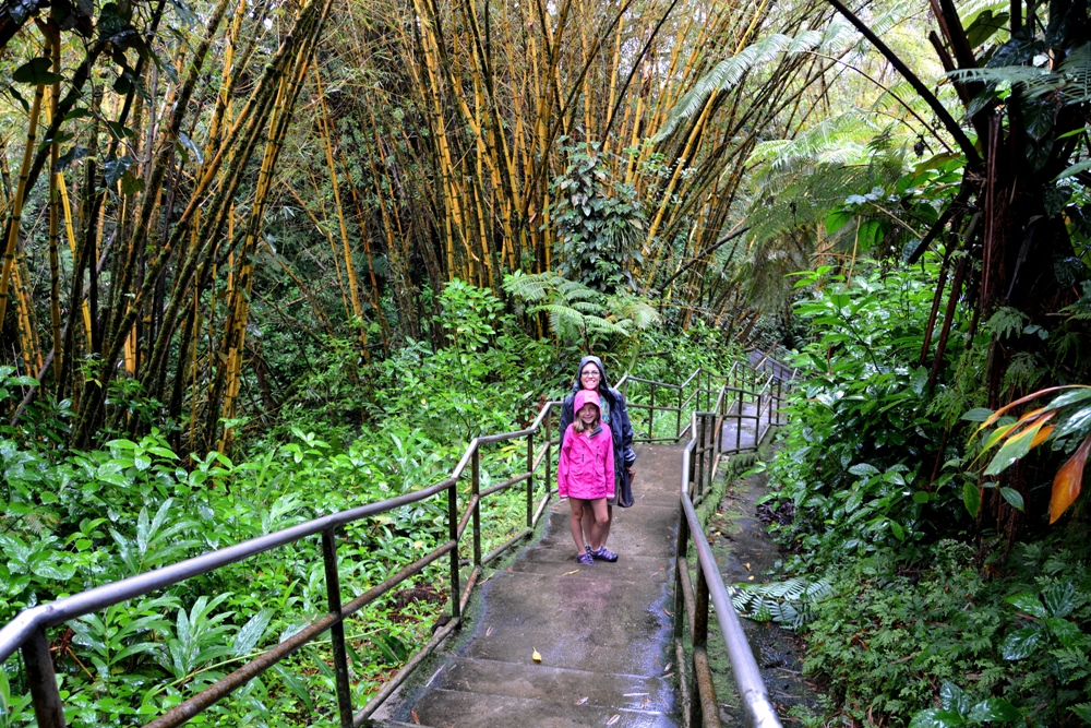 Hilo Rainforest