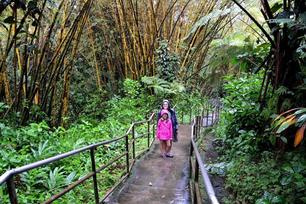 Hilo Rainforest