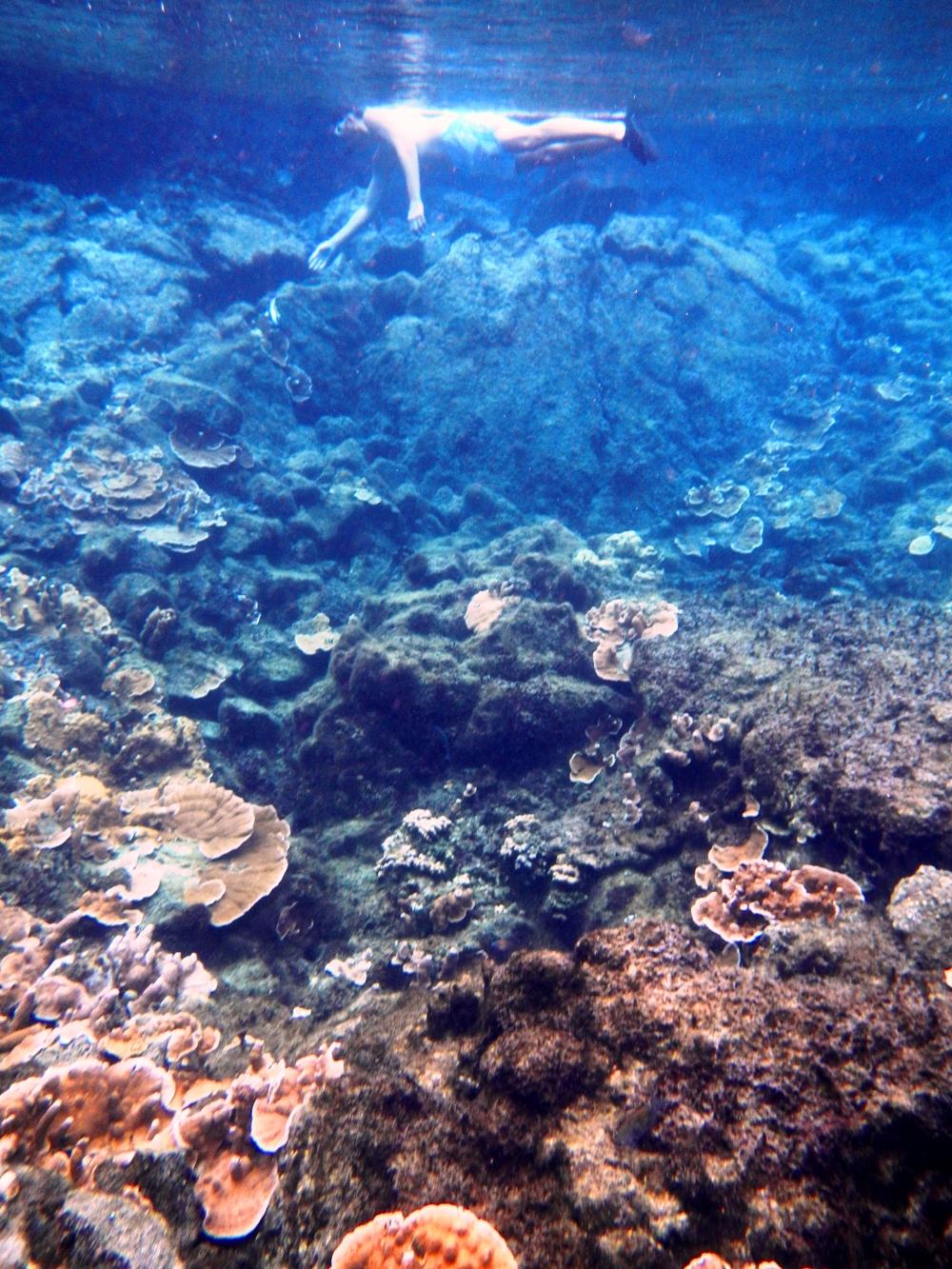 Kapoho Snorkeling