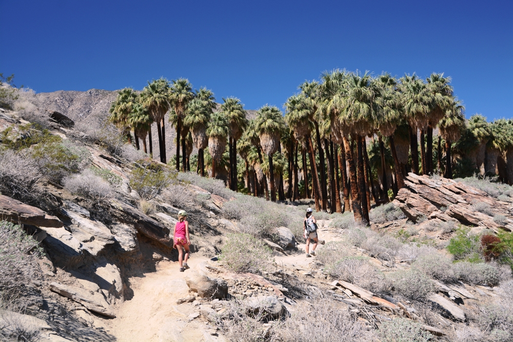 Indian Canyons Trail
